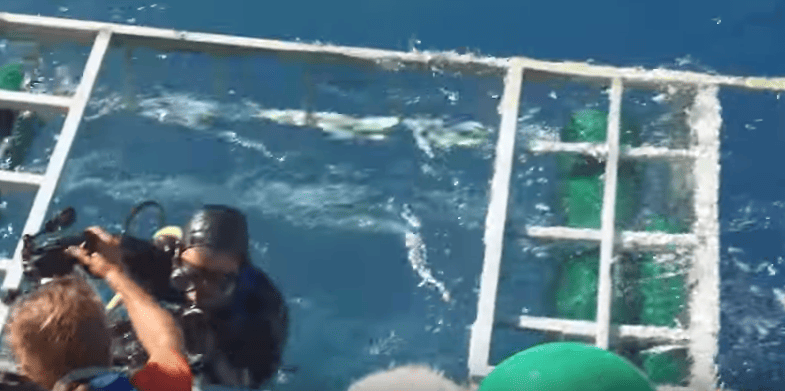 Shocking Moment Great White Shark Bursts Into Divers Cage 52011UNILAD imageoptim Shark2