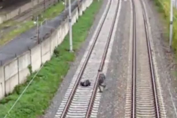 Teens Lie Down In Front Of Speeding Train To Get Social Media Likes 16232UNILAD imageoptim Two boys lie down on tracks in front of fast moving train 1