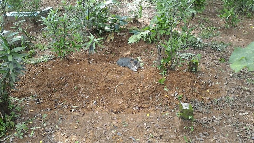 This Heartbroken Cat Has Lived By Dead Owners Grave For A Year 26974UNILAD imageoptim SWNS CAT GRAVE 04
