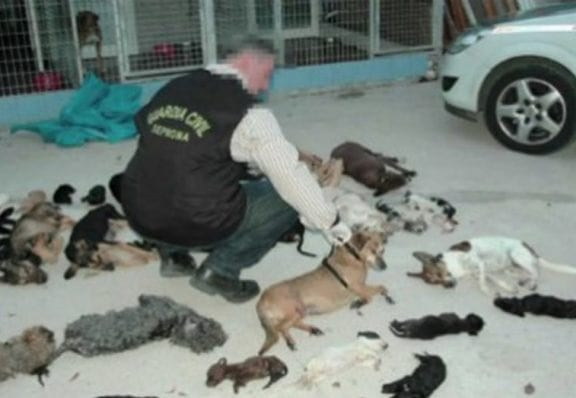 Animal Shelter Accused Of Killing 2,000 Cats And Dogs 'Slowly And Painfully'
