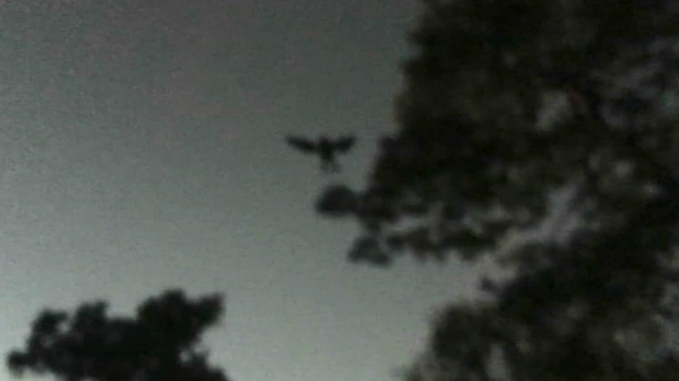 33732UNILAD imageoptim nintchdbpict000284547796 Creepy Photo Shows Mothman Monster Leaping Between Trees