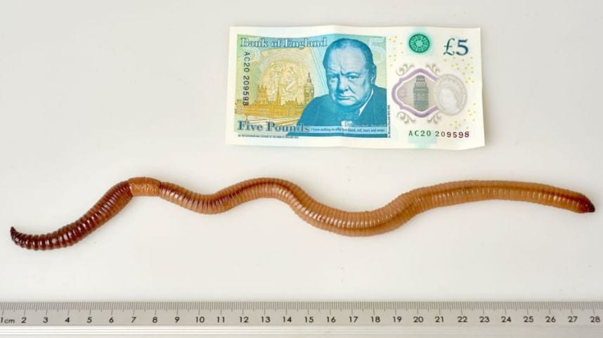 3893UNILAD imageoptim Dave the worm Internet Wants Justice After Scientists Kill Record Breaking Creature
