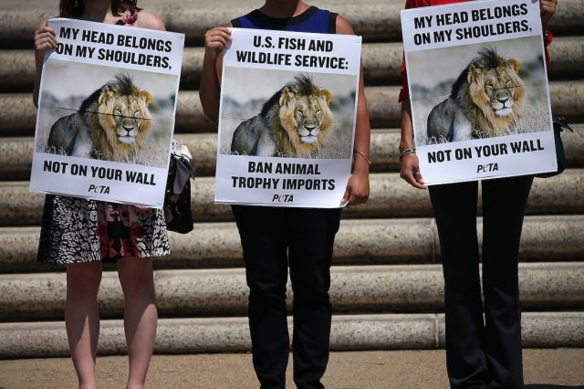 44960UNILAD imageoptim GettyImages 483016066 640x426 Cecil The Lions Brother Found Dead, Foul Play Investigated