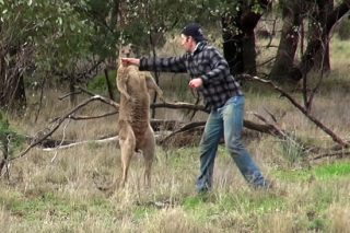 Expert Reveals Why The Kangaroo Put The Dog In A Headlock