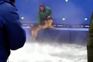 Leaked Footage Shows Dog Being 'Abused' While Shooting Movie Scene
