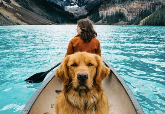 Couple Takes Dog Traveling With Them And The Pics Are Amazing