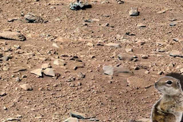 A Squirrel Has Been Spotted In This Photo Of Mars