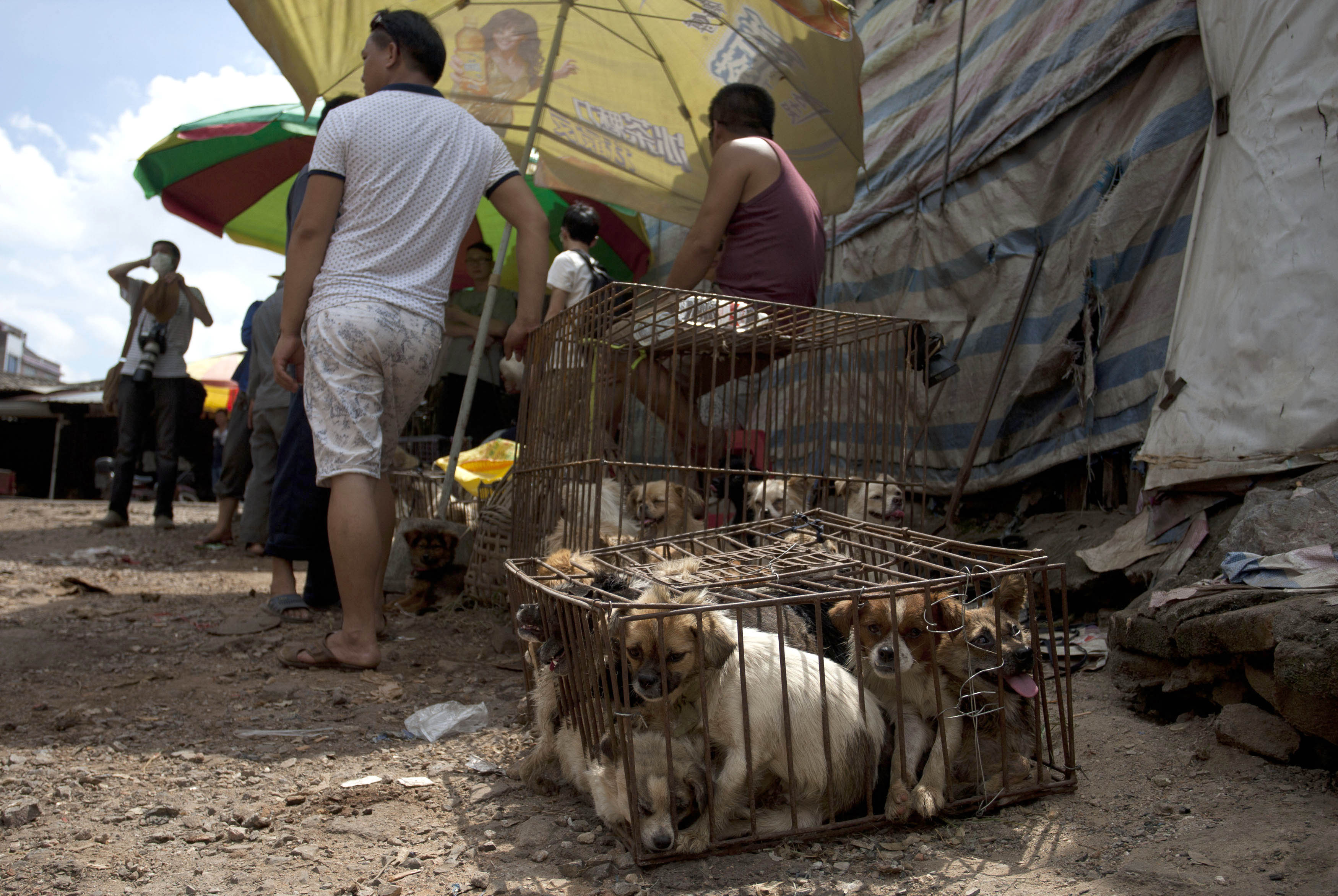 Taiwan Has Officially Banned Eating Cats And Dogs GettyImages 477996862