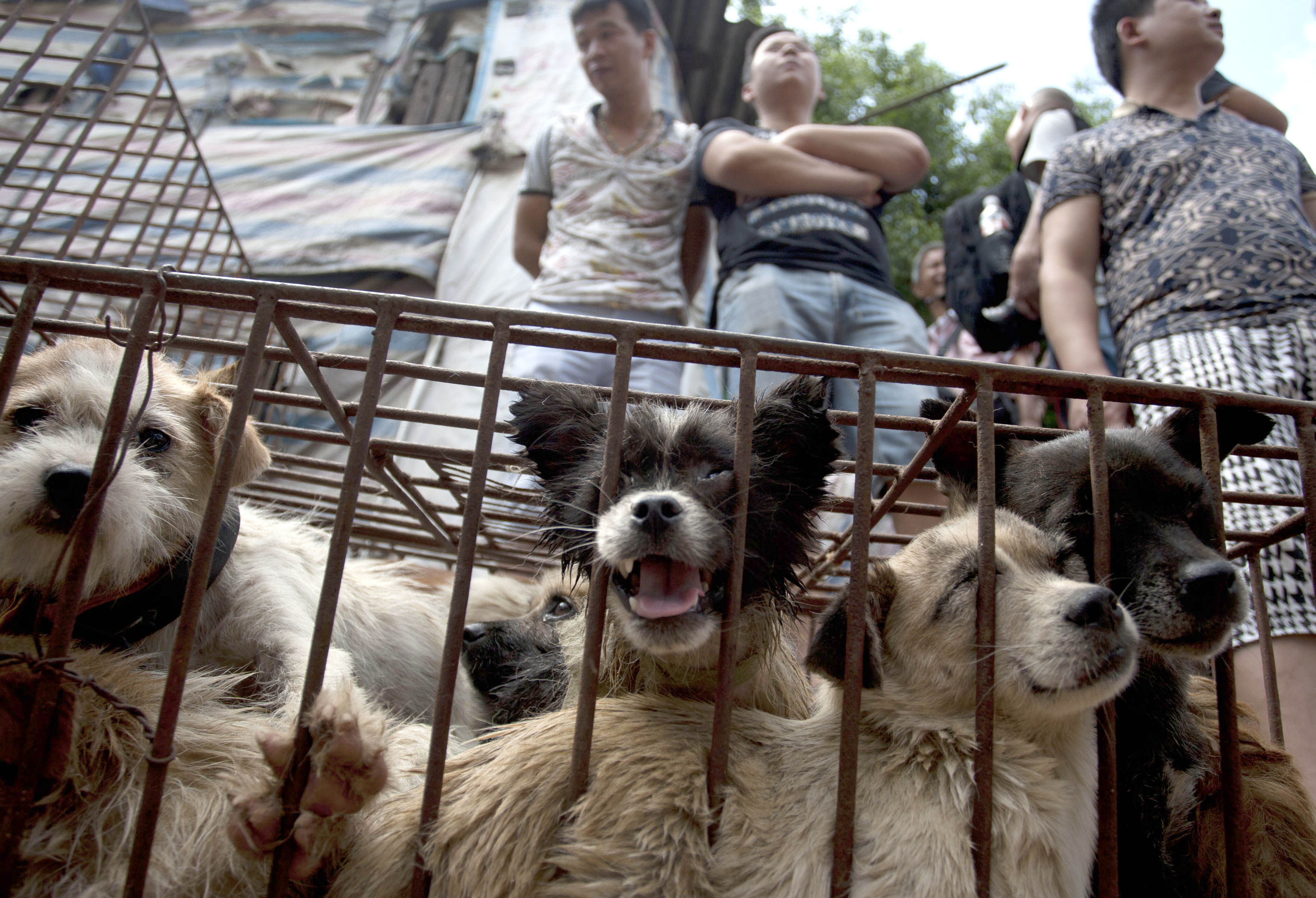 Taiwan Has Officially Banned Eating Cats And Dogs GettyImages 477996870