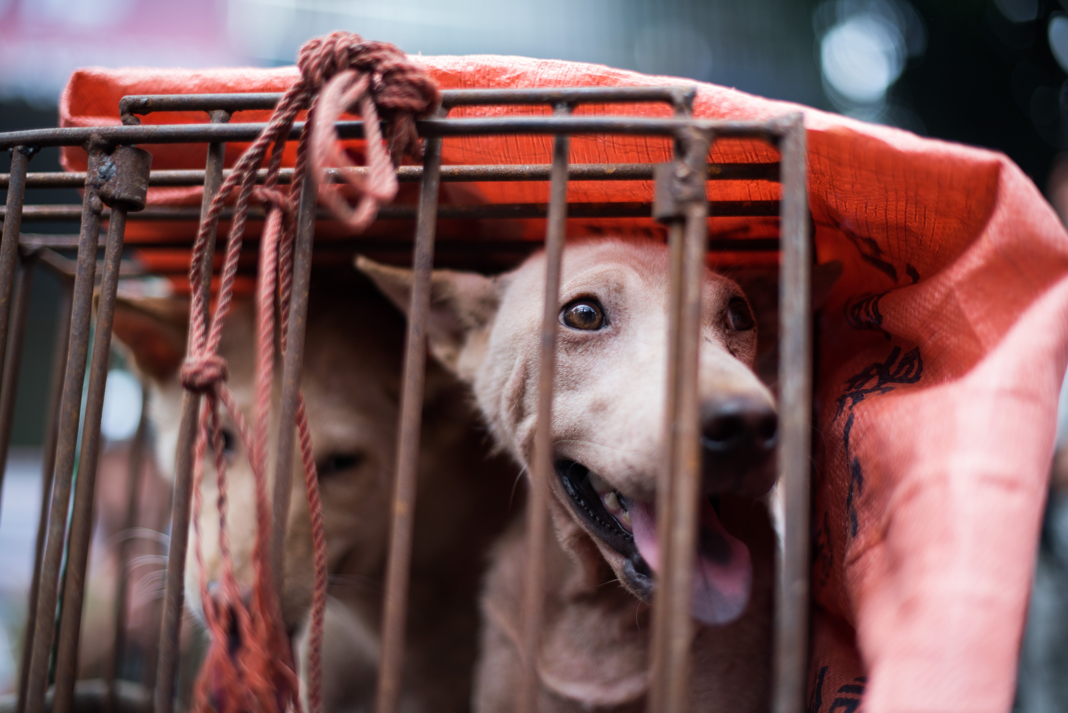 Taiwan Has Officially Banned Eating Cats And Dogs GettyImages 478052320