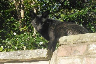 One Of UK's Rarest Animals Spotted Just Chilling On Garden Wall